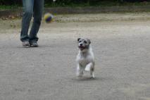 7月19日公園でボール遊び