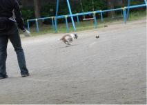 7月19日公園でボール遊び-6