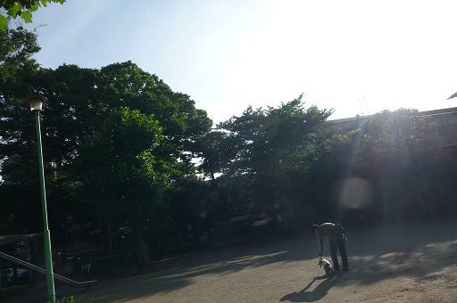 7月26日早朝の公園