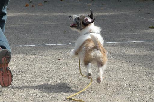 犬を右に見ながら一緒に走る