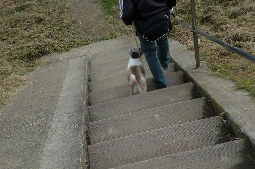 10月4日階段を下りる