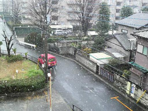雪ですよ~