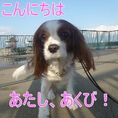 1_20110215183250.jpg