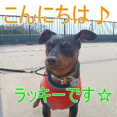 1_20110323184843.jpg