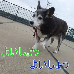 1_20110324151357.jpg