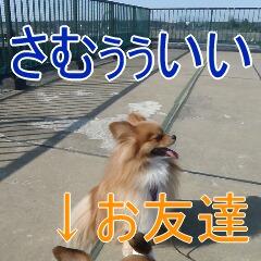 22_20110201164851.jpg