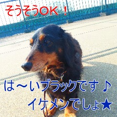 2_20110203115510.jpg