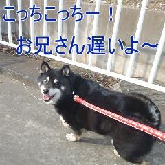 2_20110206155359.jpg