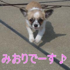 2_20110206155536.jpg