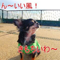2_20110210163048.jpg