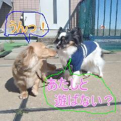 2_20110213170822.jpg