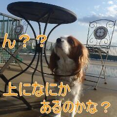 2_20110215183249.jpg
