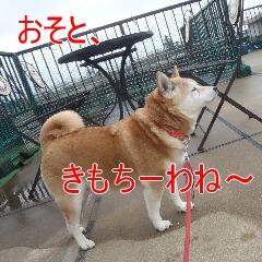 2_20110215183509.jpg
