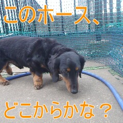 2_20110224185159.jpg