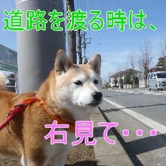 2_20110315150821.jpg