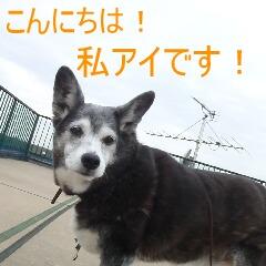 2_20110324151357.jpg