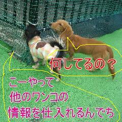 3_20081119180523.jpg