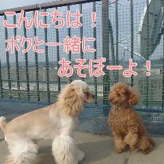 3_20110206155448.jpg
