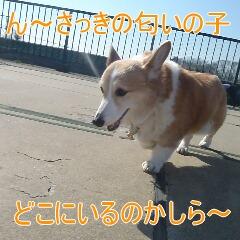 3_20110206155623.jpg