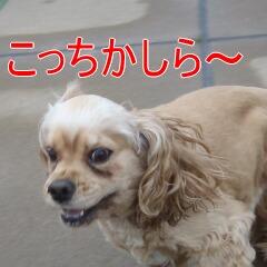 3_20110213170152.jpg