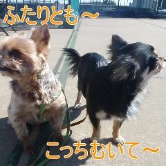 3_20110213170505.jpg