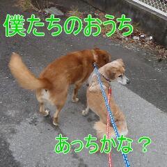 3_20110215183022.jpg