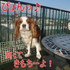 3_20110215183249.jpg