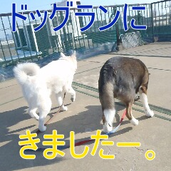 3_20110224185311.jpg