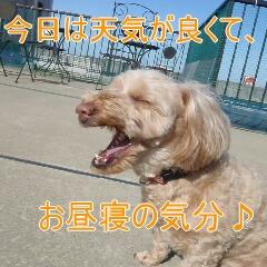 3_20110315150502.jpg