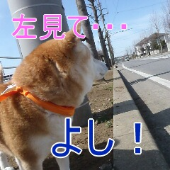 3_20110315150821.jpg