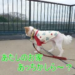 3_20110324151055.jpg