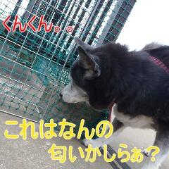 3_20110324151357.jpg