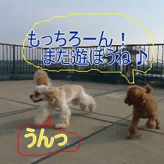4_20110206155447.jpg