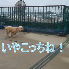 4_20110213170151.jpg