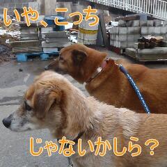 4_20110215183021.jpg