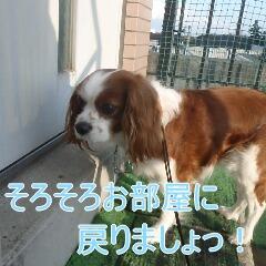 4_20110215183249.jpg