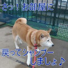 4_20110215183509.jpg