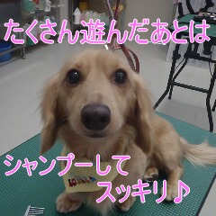4_20110218162918.jpg