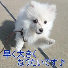 4_20110307150519.jpg