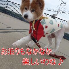 4_20110324151054.jpg