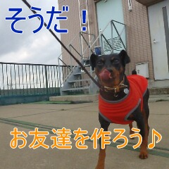 5_20110323184841.jpg