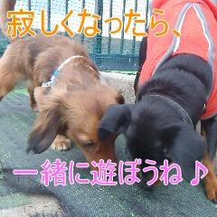 9_20110323184941.jpg