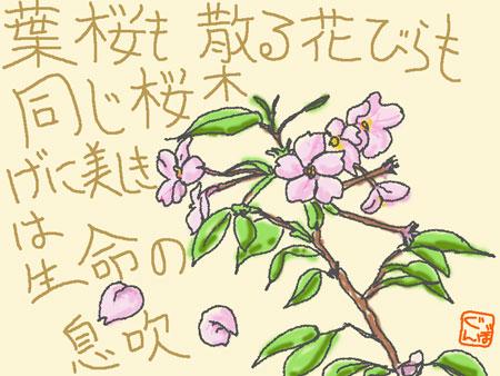 桜だねぇ・・・
