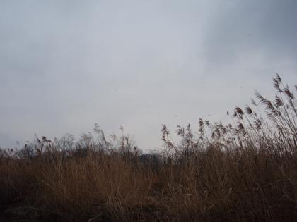 ユスリカ群飛_20110301