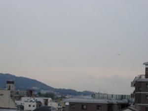 曇り空に鳥2羽