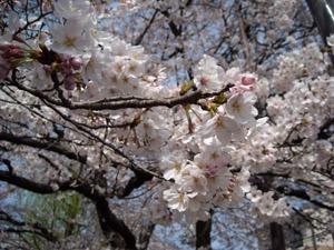 桜3 09.04.05