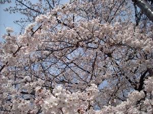 桜2 09.04.05
