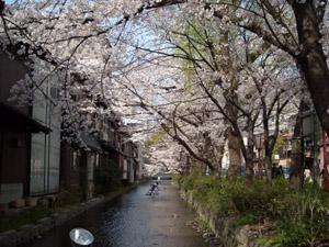 桜1 09.04.05