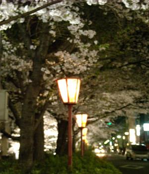 夜桜街灯 09.04.07