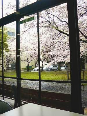20100405埼玉大学桜-blog